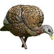 Avian X LCD Hen Feeder Turkey Decoy